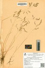 Vahlodea paramushirensis (Kudo) Roshev.