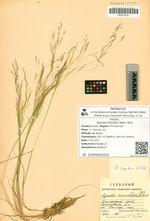 Agrostis hiemalis (Walt.) Britt.